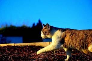 APDDA, solicita un nuevo concurso para reubicar a los gatos del Aeropuerto de Barajas