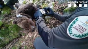 Naturaleza. La muerte del oso Cachou a la 'palestra'