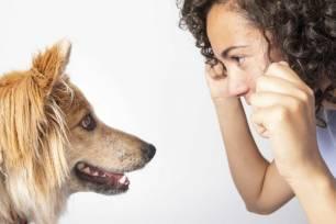 Animales de compañía. La 'Ley Celaá' ignora una asignatura de 'Educación animal'