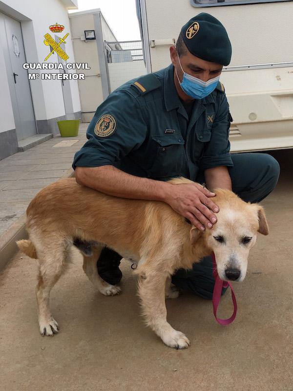 Murcia. Dos personas 'investigadas' por abandonar a un perro enfermo en un polígono industrial de Cieza