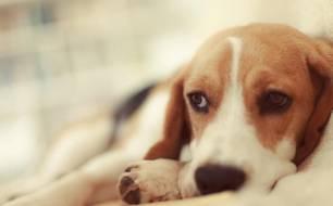 Animales de compañía. Milanuncios, el portal permite publicar datos falsos