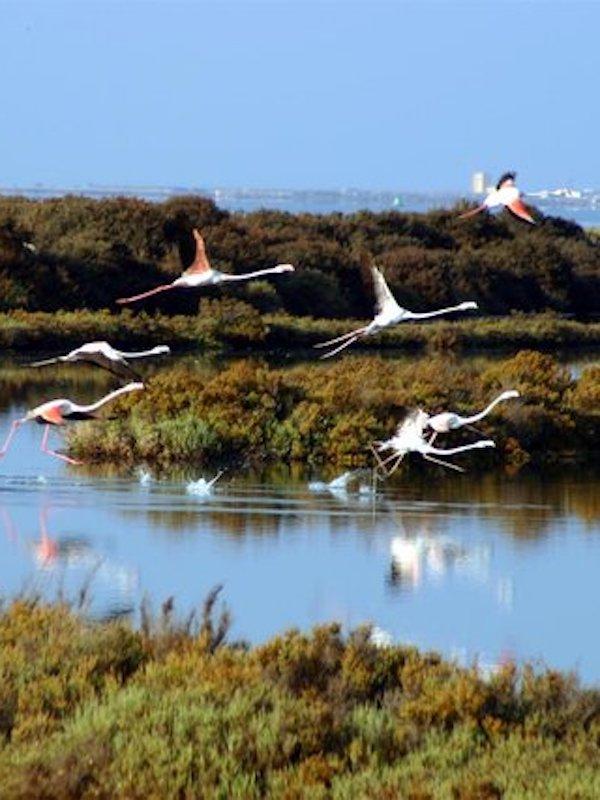 Medio ambiente, polémica a cuenta del 'Parque Natural Bahía de Cádiz'
