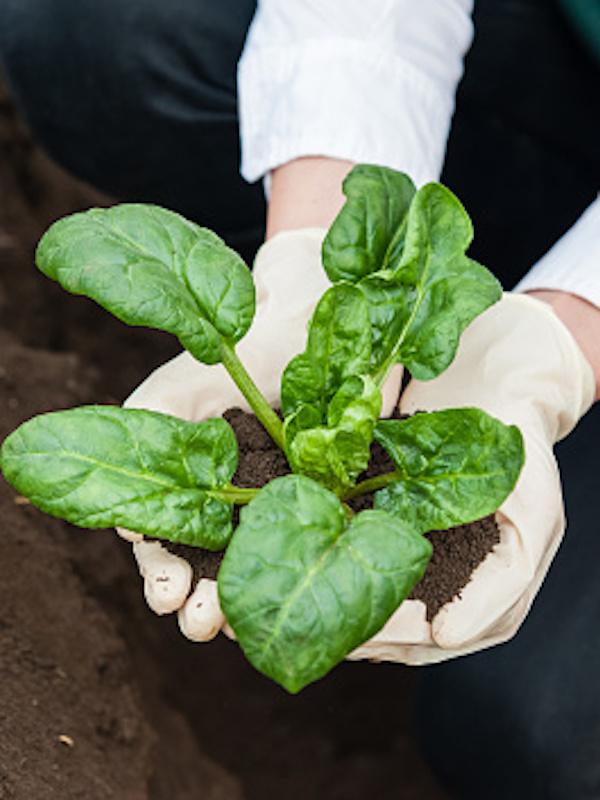 Alimentos ecológicos. Castilla-La Mancha centrada en la producción BIO