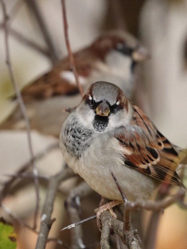 Restricciones al ozono han salvado 1.500 millones de aves en EEUU
