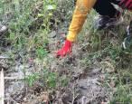Residuos. Tarragona, 450 litros de basura recogidos en el río Francolí