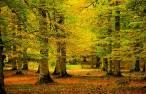 Los árboles de hoja caduca muestran sus límites para absorber las emisiones