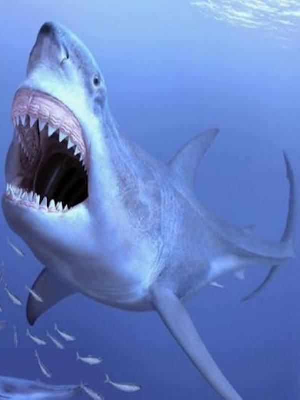 El tiburón gigante megalodón tuvo una zona de cría en Tarragona