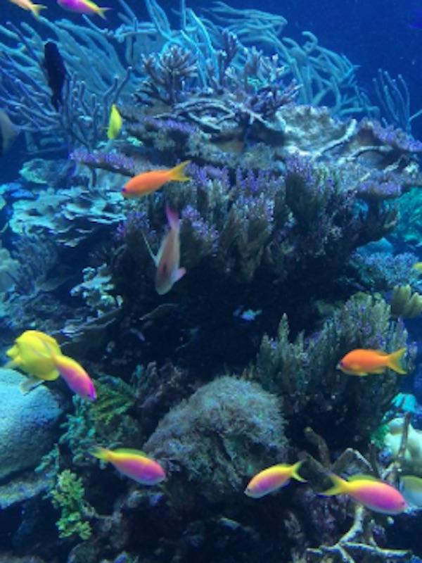 Medio ambiente, la protección del entorno marino de Europa es poco profunda