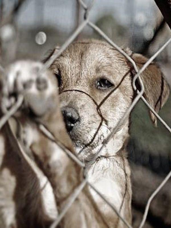Animales de compañía. Canarias, dos personas e investigadas por delitos de maltrato animal