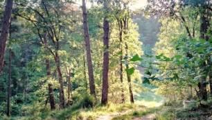 Medio ambiente, ¿Cómo comprender el funcionamiento y la dinámica de los bosques mixtos limitados por el agua?