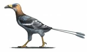 Naturaleza, un ave con pico de cuchilla revela la diversidad oculta del Cretácico