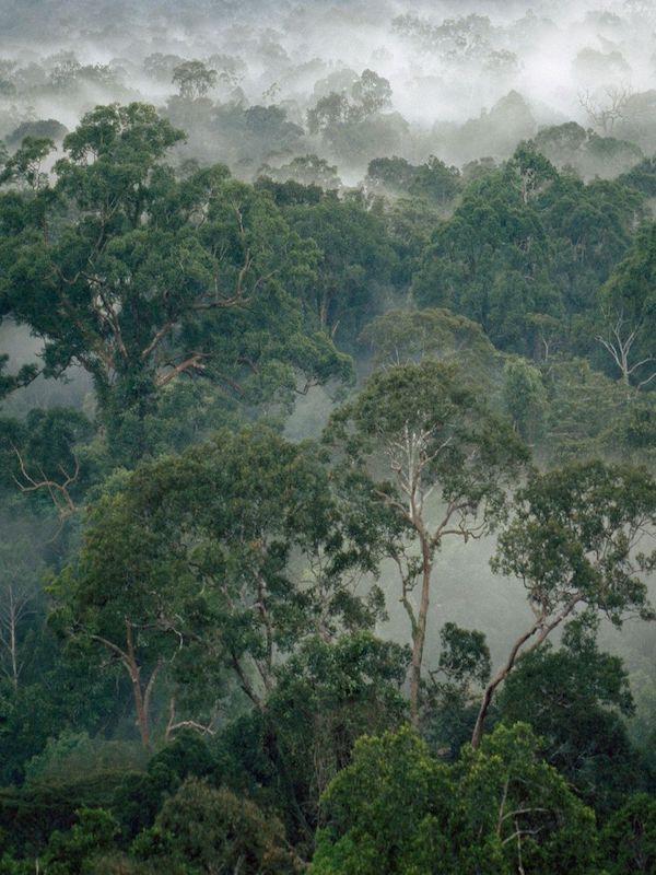 El futuro de la selva del Amazonas en manos de los árboles más pequeños