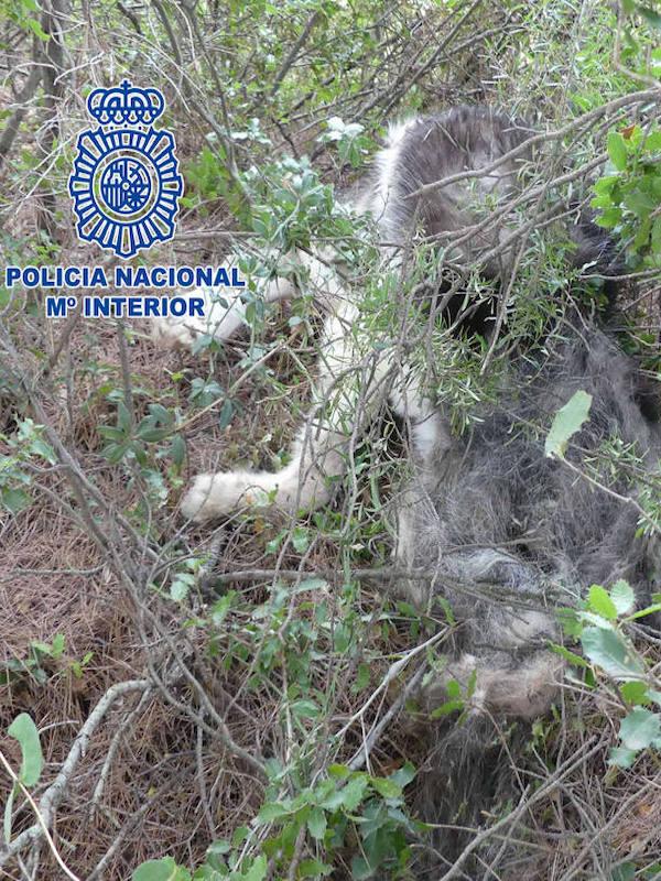 Imputados tres jóvenes por la muerte de un perro en Logroño
