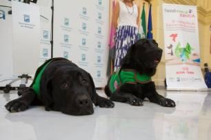 Los niños con discapacidad de Málaga recibirán la asistencia de perros de terapia