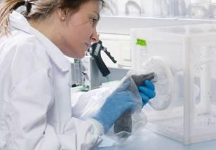Confirmado un caso de virus del Nilo Occidental en Catalunya en un ave rapaz en el Segrià