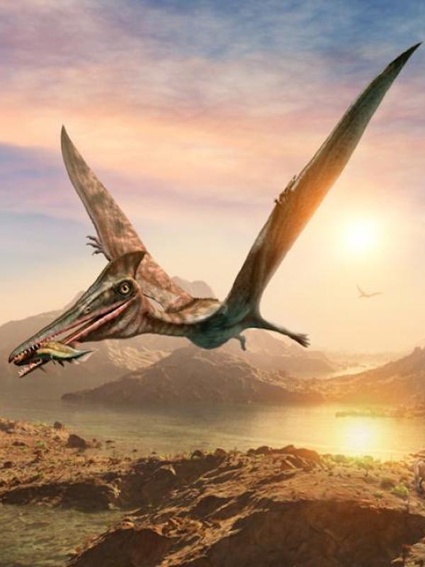 Así se diversificaron los grandes pterosaurios con dientes