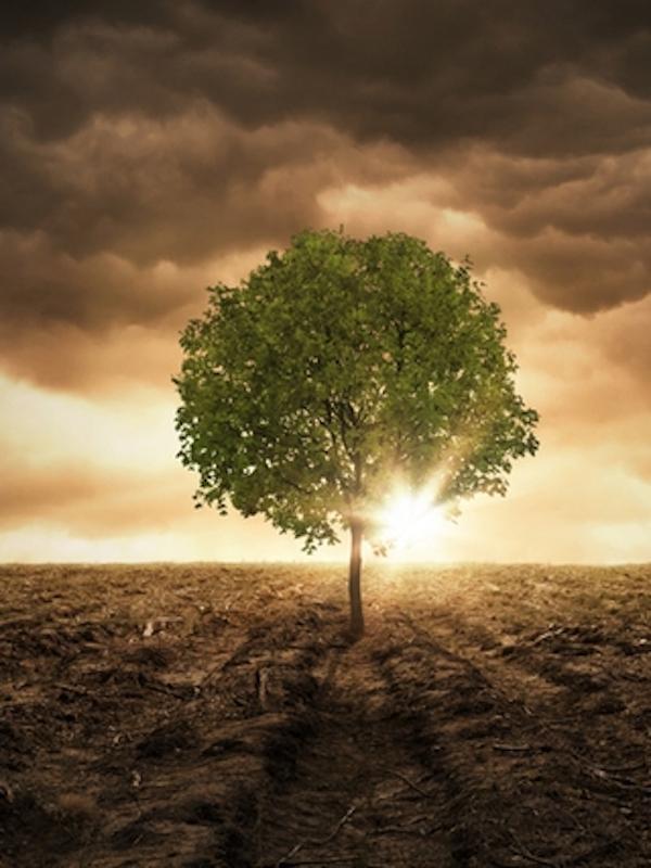 Prueba del rescate evolutivo en la naturaleza ante el cambio climático