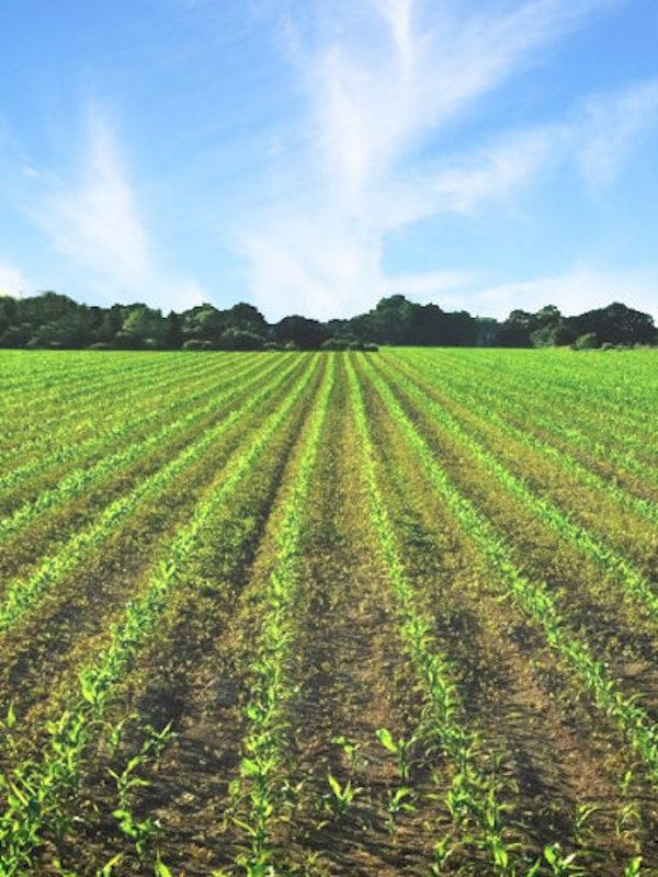 México. Agricultura tradicional, garantía de salud y bienestar ecológico y social