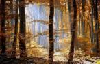Europa quiere una estrategia forestal que garantice la sostenibilidad de los bosques