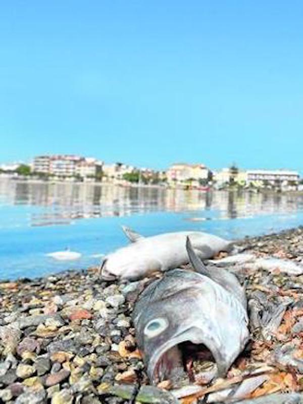 Aniversario mortalidad masiva de peces en el Mar Menor