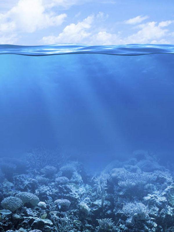 La federación canaria ecologista pide paralizar las investigaciones de minería submarina