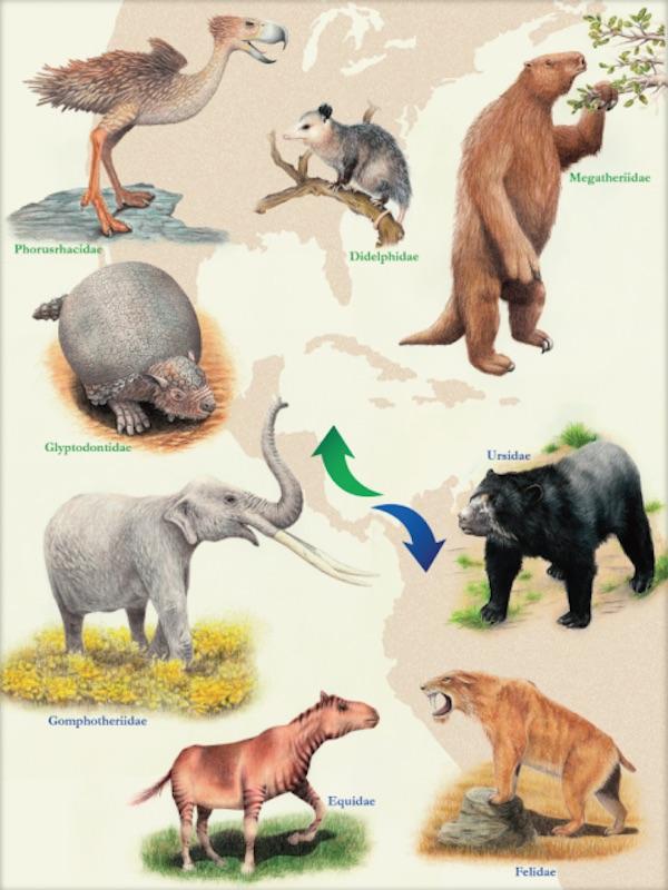 Explicación a la migración desigual de mamíferos entre las Américas