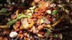 Lipor promueve un ciclo de Webinar´s con motivo del 15 aniversario de su planta de compostaje