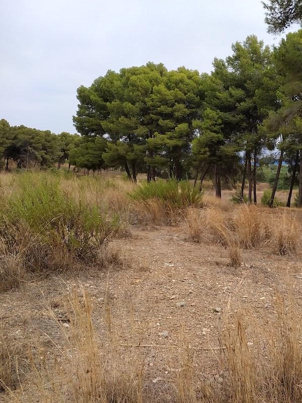 El anillo verde de Málaga 'viento en popa'