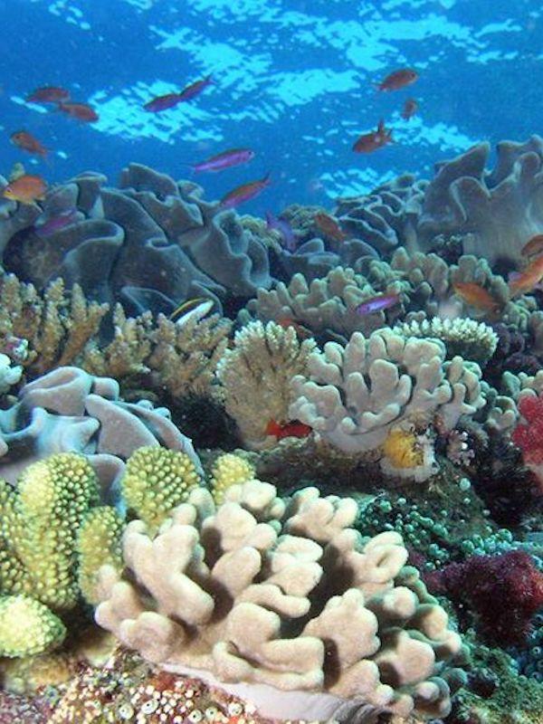 Cada 30 años la Gran Barrera de Coral pierde la mitad de su volumen