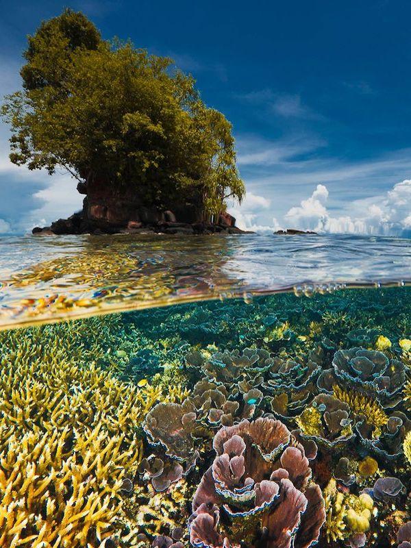 Las Naciones Unidas intensifican sus esfuerzos para restaurar el mundo natural