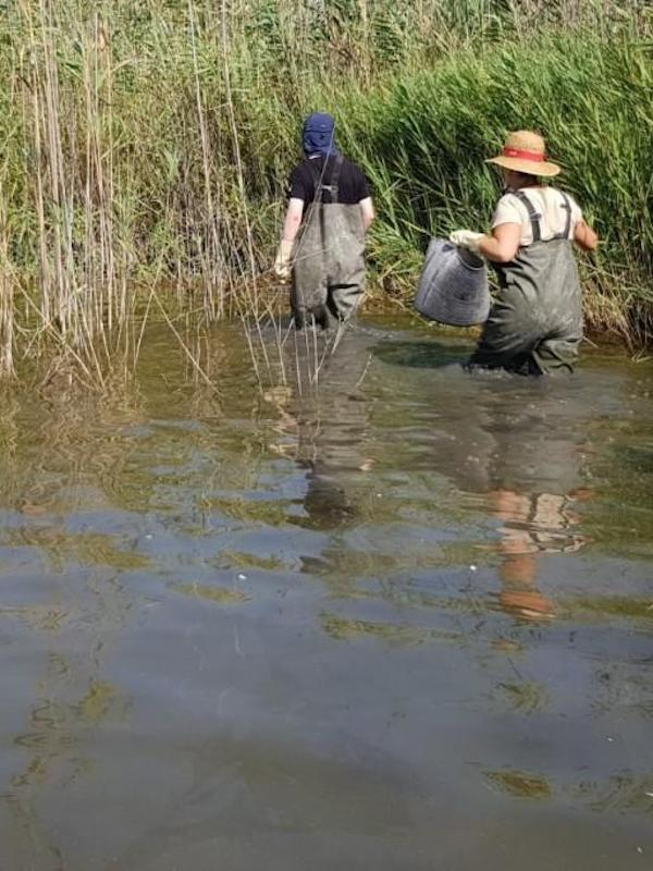 Hidraqua y la UV estudian los grupos biológicos acuáticos indicadores de la calidad del agua en humedales