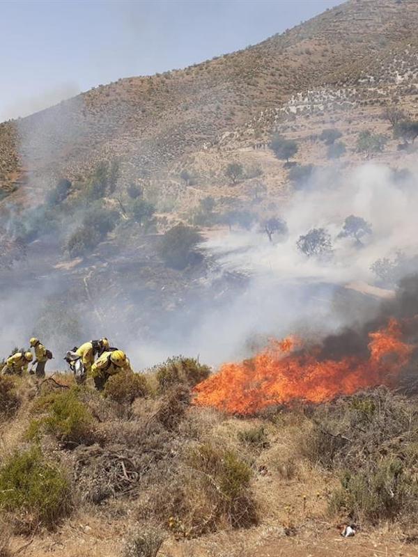 Científicos de Granada piden medir los efectos de la tala de árboles después de incendios, plagas o tormentas