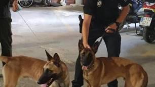 Riba-roja crea una sección en la Policía Local formados en Derecho y protección para evitar maltrato animal