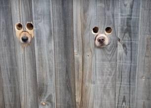 Curioso video. Hacen un par de agujeros en una valla para que sus perros puedan saludar a su dueña
