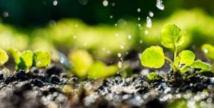 Restaurar un tercio de los ecosistemas en áreas 'sensibles' podría prevenir gran parte de las 'extinciones'