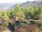 Galicia subvencionará la plantación de árboles y la realización de tratamientos silvícolas