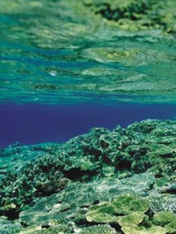 España apoya la sostenibilidad del sector pesquero y acuícola y reforzar la protección de la Red Natura 2000 en el medio marino