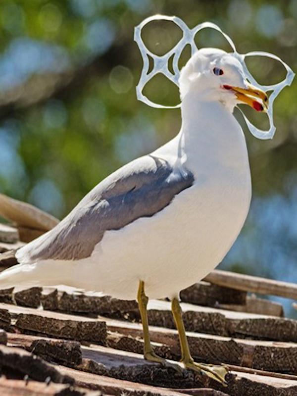 Las aves marinas 'victimas' del plástico