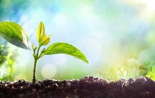 Medio millón de empleos perdidos por el COVID-19 se pueden recuperar con políticas ecológicas