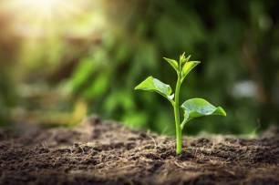 Valoran negativamente los premios Andalucía Medio Ambiente 2020