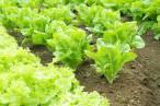 El Consejo de Agricultura Ecológica de la Región de Murcia se pronuncia contra la lucha contra la desnutrición