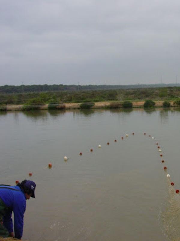 Fomento de la acuicultura de esteros como generador de empleo en la Bahía de Cádiz