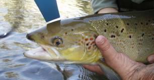 Pillado pescando salmón de manera furtiva en el río Narcea