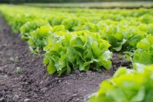 El Consejo de Agricultura Ecológica de la Región de Murcia, Caerm: 'el papel de la producción ecológica como clave en la lucha contra la pobreza'