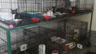 La 'nefasta' gestión del Ayuntamiento de Málaga por la gestión del Centro Zoosanitario