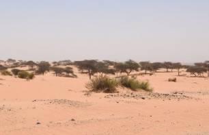 Datan actividad de los ríos pérdidos del inhóspito desierto de Thar