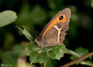 Los insectos tienen una tasa de extinción ocho veces más rápida que la de mamíferos, aves y reptiles