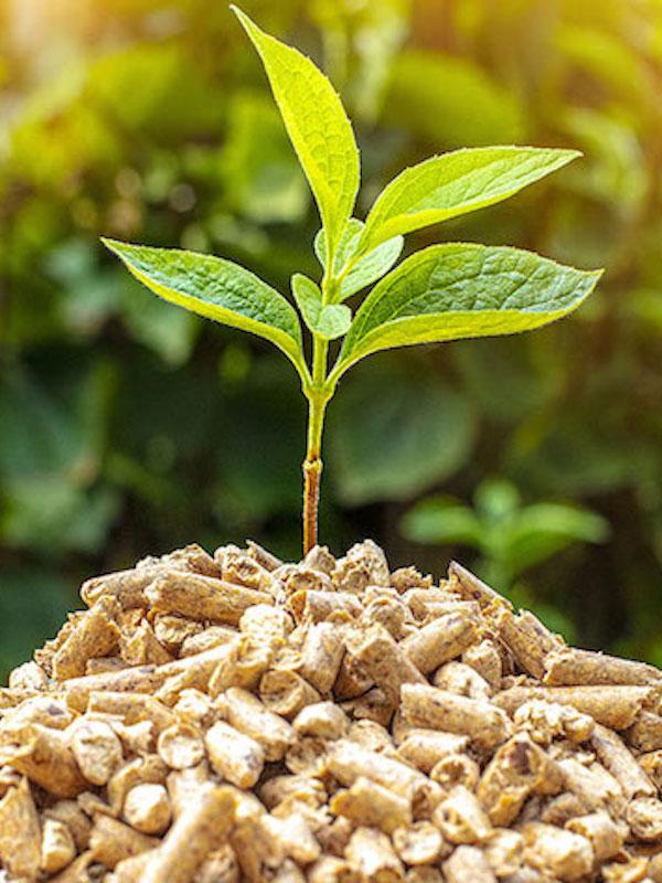 AVEBIOM, innovadora herramienta para demostrar el uso sostenible de la biomasa en el sector energético