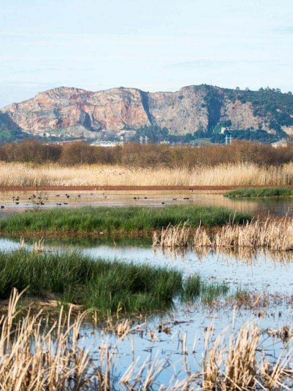 Logran detener la pérdida de biodiversidad en la Bahía de Santander