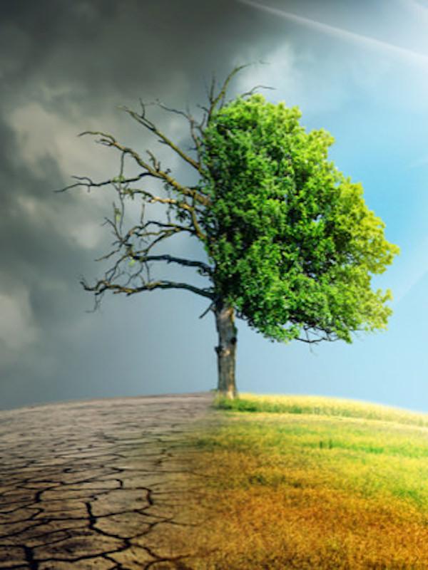 Día Internacional contra el Cambio Climático 2020, y el calentamiento global